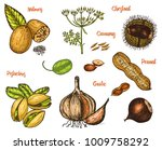 herbs  condiments and spices.... | Shutterstock .eps vector #1009758292