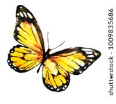 beautiful yellow butterfly... | Shutterstock . vector #1009835686