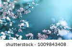 Stock photo beautiful floral spring abstract background of nature branches of blossoming apricot macro with 1009843408