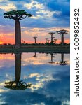 beautiful baobab trees at... | Shutterstock . vector #1009852432