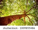 big tree in the park | Shutterstock . vector #1009855486
