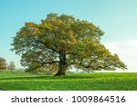 old english oak tree in the... | Shutterstock . vector #1009864516