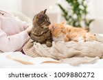 Stock photo pets hygge and people concept close up of female owner with red and tabby cat in bed 1009880272