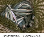 Selective Focus Fish In Green...
