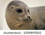 Small photo of A Seal in a seal sanctuary