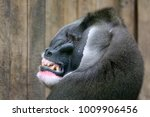 drill close up portrait   Shutterstock . vector #1009906456