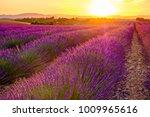 lavender field in the summer ... | Shutterstock . vector #1009965616