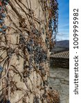 dry vine grapes on ancient... | Shutterstock . vector #1009995982