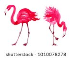 pink flamingo watercolor | Shutterstock . vector #1010078278