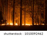 forest fire  wildfire burning... | Shutterstock . vector #1010092462