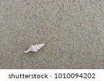 fossil shell on the sand beach  ... | Shutterstock . vector #1010094202