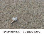 fossil shell on the sand beach  ... | Shutterstock . vector #1010094292