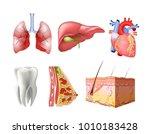 different flat human organs set ... | Shutterstock .eps vector #1010183428