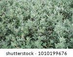 green leaves for background | Shutterstock . vector #1010199676