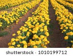 blurred summer background with... | Shutterstock . vector #1010199712