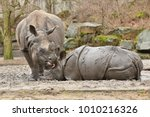 indian rhinoceros mother and a... | Shutterstock . vector #1010216326