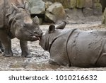 indian rhinoceros mother and a... | Shutterstock . vector #1010216632