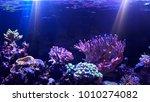 coral reef aquarium tank scene | Shutterstock . vector #1010274082