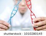 scientist analyse dna molecule... | Shutterstock . vector #1010280145