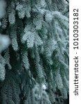 pine tree branch frost  | Shutterstock . vector #1010303182