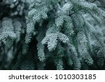 pine tree branch frost  | Shutterstock . vector #1010303185