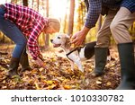 Stock photo senior couple with dog on a walk in an autumn forest 1010330782