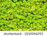 Close Up Green Moss Texture ...
