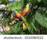 rainbow lorikeet parrot in... | Shutterstock . vector #1010380222