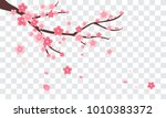 sakura branch with falling...