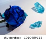 blue roses  tenderness  stones | Shutterstock . vector #1010459116