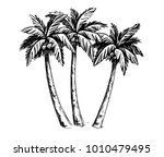 palm sketch. hand drawn vector... | Shutterstock .eps vector #1010479495