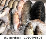 fragment from the fish store.... | Shutterstock . vector #1010495605
