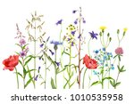 watercolor drawing wild plants... | Shutterstock . vector #1010535958