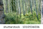 grizzly in forest | Shutterstock . vector #1010536036
