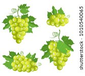 collection of isolated grape.... | Shutterstock .eps vector #1010540065