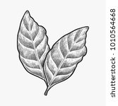 hand drawn coffee leaf vector... | Shutterstock .eps vector #1010564668