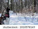 husky in the winter forest | Shutterstock . vector #1010578165
