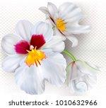 orchid flowers miltoniopsis... | Shutterstock .eps vector #1010632966