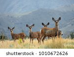 a family of deer look at the... | Shutterstock . vector #1010672626