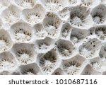 white coral texture macro photo.... | Shutterstock . vector #1010687116