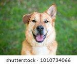outdoor portrait of a mixed... | Shutterstock . vector #1010734066