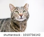 A Brown Tabby Cat That Has Bee...