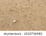 fossil shell on the sand beach  ... | Shutterstock . vector #1010736982
