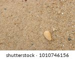 fossil shell on the sand beach  ... | Shutterstock . vector #1010746156