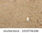 fossil shell on the sand beach  ... | Shutterstock . vector #1010746186