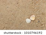 fossil shell on the sand beach  ... | Shutterstock . vector #1010746192