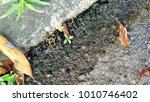 leaves and floral placements... | Shutterstock . vector #1010746402