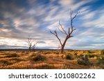 flinders ranges  south australia   Shutterstock . vector #1010802262