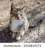 cute kitten sits on the ground...   Shutterstock . vector #1010819272