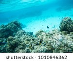 colourful damselfish and... | Shutterstock . vector #1010846362